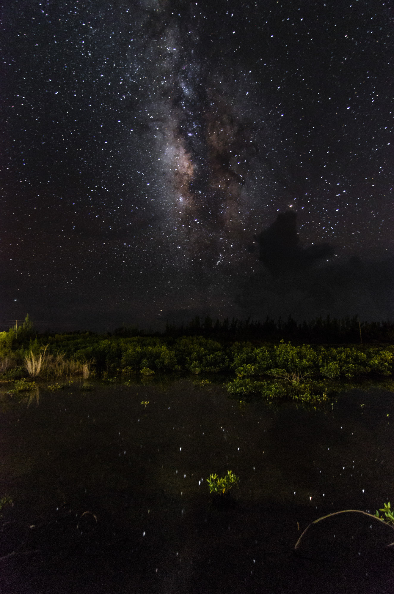 Mangrove_Milky_Way